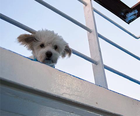 Sur le ferry avec le chien