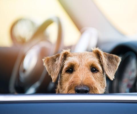 Denken Sie daran - Hitzefalle Auto