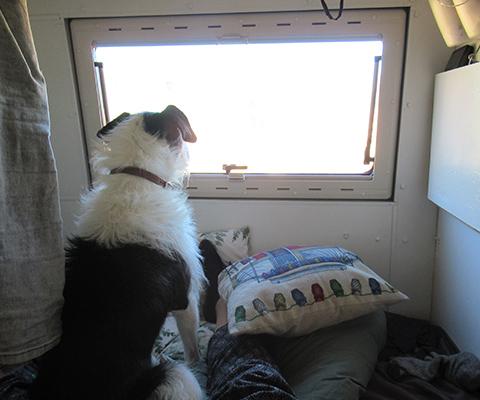 voyage de longue durée en camping-car avec votre chien