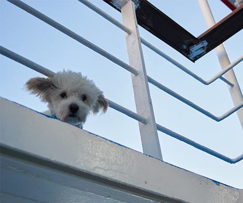 Mit dem Hund auf einer Fähre reisen