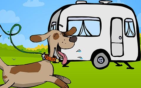Guide du chien au camping – pour un séjour réussi